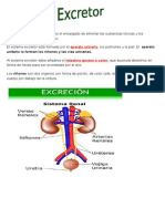 Sistema Excretor (2)