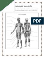 ACTIVIDAD DE BIOLOGÍA 7.pdf