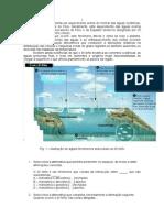 Ficha de estudo Biologia