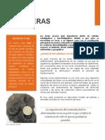 rocas fosiliferas