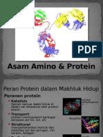Asam Amino_protein