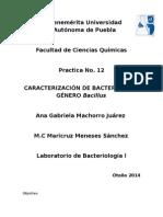 Bacillus 12