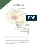 Moto Neuron A