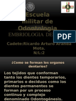 Embriologia Dental