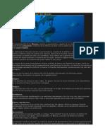 Reproducción y Gestación Del Tiburón