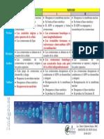 Tabla Comparativa Mitosis y Meiosis