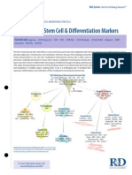 Mesenchymal Stem Cell Differentiation Markers