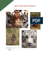 Tigre de bengala y tigre blanco.docx