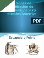 Clase 3. Patrones de Facilitacion Escapula, Pelvis, Extremidad Superior