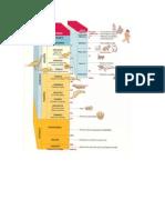 Períodos geológicos.doc