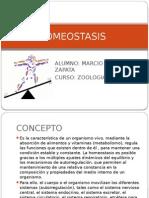 Homeostasis - Expo