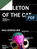 Skeleton of the Cat - Bio 102