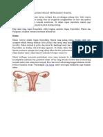 Tugas Vagina Fix