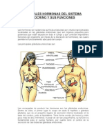 Principales Hormonas Del Sistema Endocrino y Sus Funciones