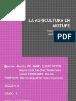 La Agricultura en Motupe