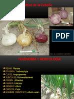 Horticultura.pptx
