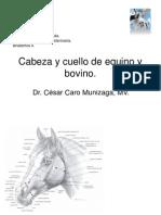 Cabeza y Cuello Equinos y Rumiantes.