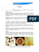 penicillum sp.