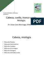 005 Miologia Cabeza Cuello Tronco y Cola.
