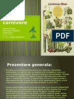 Plante Carnivore Clasa a 10-a Biologie