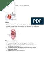 Organ Pencernaan Manusia