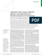 Agenesis of the Corpus Callosum - Genetic, Developmental and Functional Aspects of Connectivity