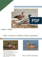 Expo Ornitologia