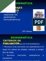 6) Bioenergética