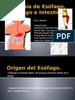 Anatomía-de-Esófago-Estomago-e-Intestino-Delgado (1).pptx