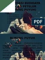Presentasi Budidaya Unggas Petelur (Burung Puyuh)