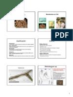 2nematodes y Filloxera