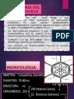 adenovirus.pptx