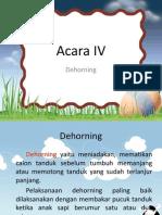 Acara IV Dehorning