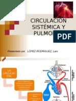 Circulación Sistémica y Pulmonar