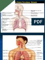 Anatomi Sal.napas Kuliah 09