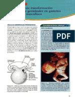 Capitulo 2 Langman Embriologia Mc3a9dica 11c2b0 Edicic3b3n