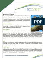 american kestrel fact sheet 2  2   4