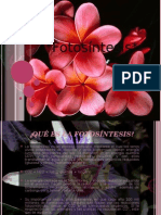 Proceso de Fotosíntesis.[1]