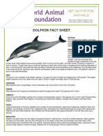 dolphin fact sheet