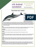 dolphin fact sheet