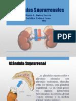 glndulas-suprarrenales
