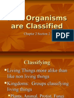 How Organisms Are Classified