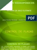 Cuarta Parte Control de Plagas Cultivos Hidropónicos (1)