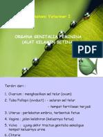 Bahan Kuliah Organa Genitalia Feminina