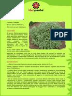 Coltivazione Salvia