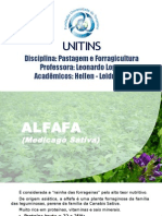 b  Alfafa e Colopogonio.pptx