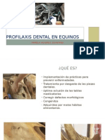 Profilaxis Dental en Equinos
