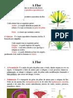 6 - Plantas II.ppt