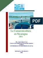 Camaronicultura en Nicaragua 2001