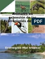 Animales en Extensión de Las Ecorregiones Del Perú